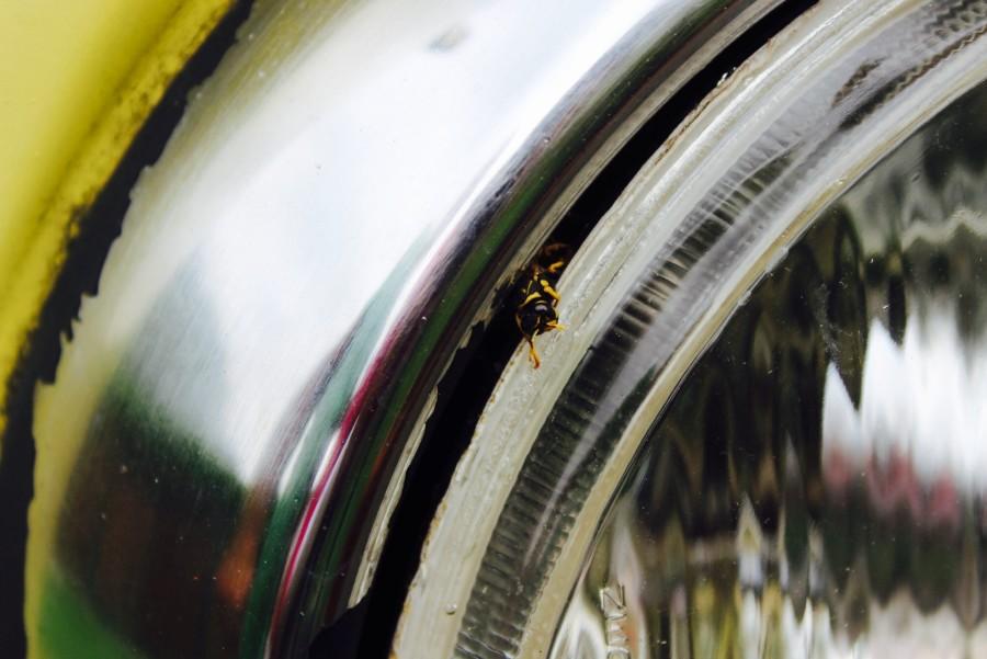 bulli-wespen-licht